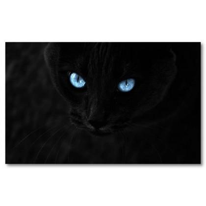Αφίσα (μαύρο, γάτα, μάτι, μαύρο, λευκό, άσπρο)